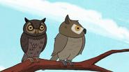 Short7 owl meet owl