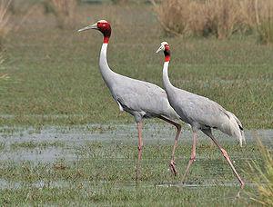 Cranes sacred to Hestia & Hermes