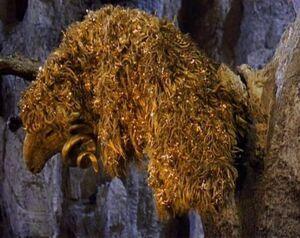 Golden Fleece 6325.jpg