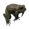 Cane Toad.png