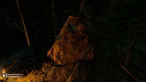 Unknown Mushroom-6.jpg