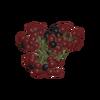 Psychotria Virdis Berries.png