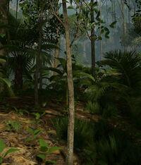 Tree -small.jpg