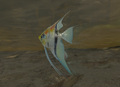 Angelfish Underwater.png
