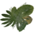 Small leaf pile.png