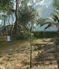 Small Tree.jpg