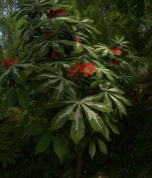 CassavaPlant.jpg
