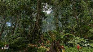 Brazillian nut tree screenshot 2.jpg