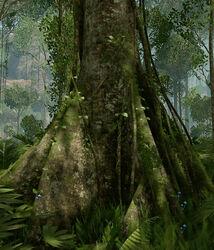 Brazillian Tree.jpg