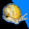 Mystery snail.png