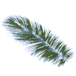 Palm leaf.png
