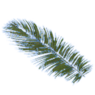 Palm leaf.png