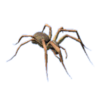 Brasilian Wandering Spider.png