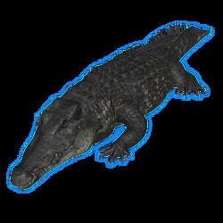 Black caiman.png