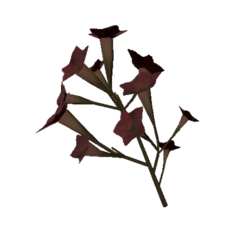 Tobacco Flowers Dryed.png