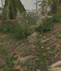 Very Small Tree.jpg