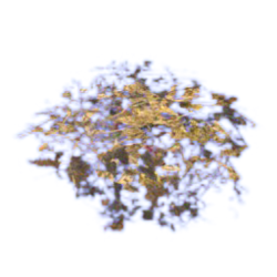Dry leafs.png