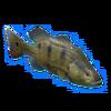 Peacock Bass.png