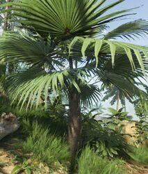 Fan Leaf Palm.jpg
