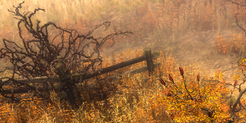 Withering Fields Icon.png