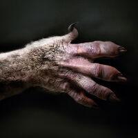 Coyotl Hand Concept Art