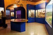 Museo di storia naturale Grosseto