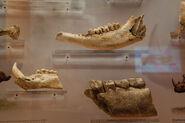 Museo di storia naturale Grosseto 5
