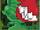 Bountiful Growtopian-Eating Looming Plant