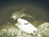Crashed Merryweather Plane