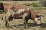 Animals (GTA V)