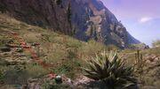 Peyote Plants GTAVe 04 Mt ChiliadNorth View.jpg