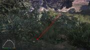 Peyote Plants GTAVe 16 Galileo Tunnel View.jpg
