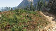 Stockpiling-GTAO-WestCountry-Land-WestPaletoBayForest.jpg