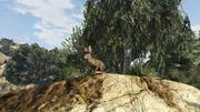 Peyote Plants Animals GTAVe Rabbit.png