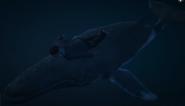 Blue Whale-Body-GTAV