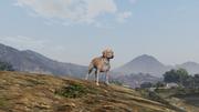 Peyote Plants Animals GTAVe Labrador.png