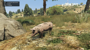 Peyote Plants Animals GTAVe Pig.png