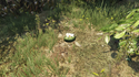 Peyote Plants in GTA Online