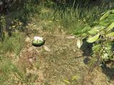 Peyote Plants in GTA Online