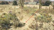 Peyote Plants GTAVe 12 Desert Oilfield View.jpg