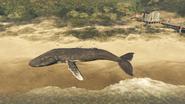 Whales-GTAO-Beached-CayoPerico