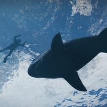 Shark-GTAV.jpg