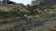 Peyote Plants Animals GTAVe West-Highland-Terrier.png