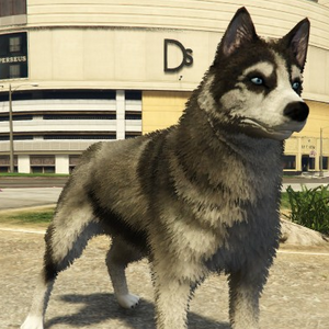 Husky-GTAV-PS4.png