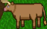 77 Bull 11.png