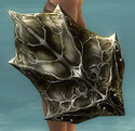 Echovald Shield