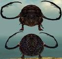Beetle Metamorphosis effect.jpg