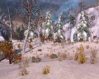 Frozen Forest.jpg
