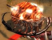 Rock Beetle.jpg
