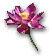 Iboga Blossom.jpg